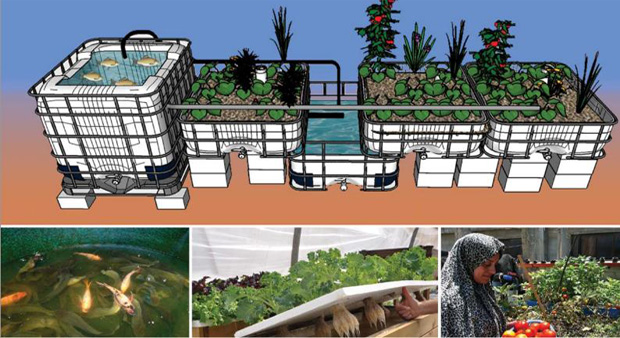 Acuaponia bio dinamic for Como criar peces en casa para consumo
