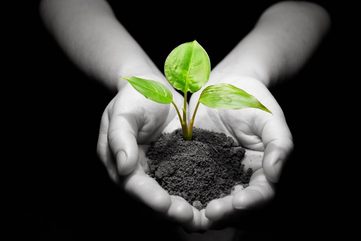 La Agricultura Biodinámica ya es una realidad